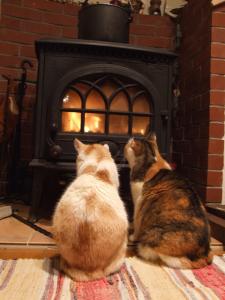 ストーブと猫たち