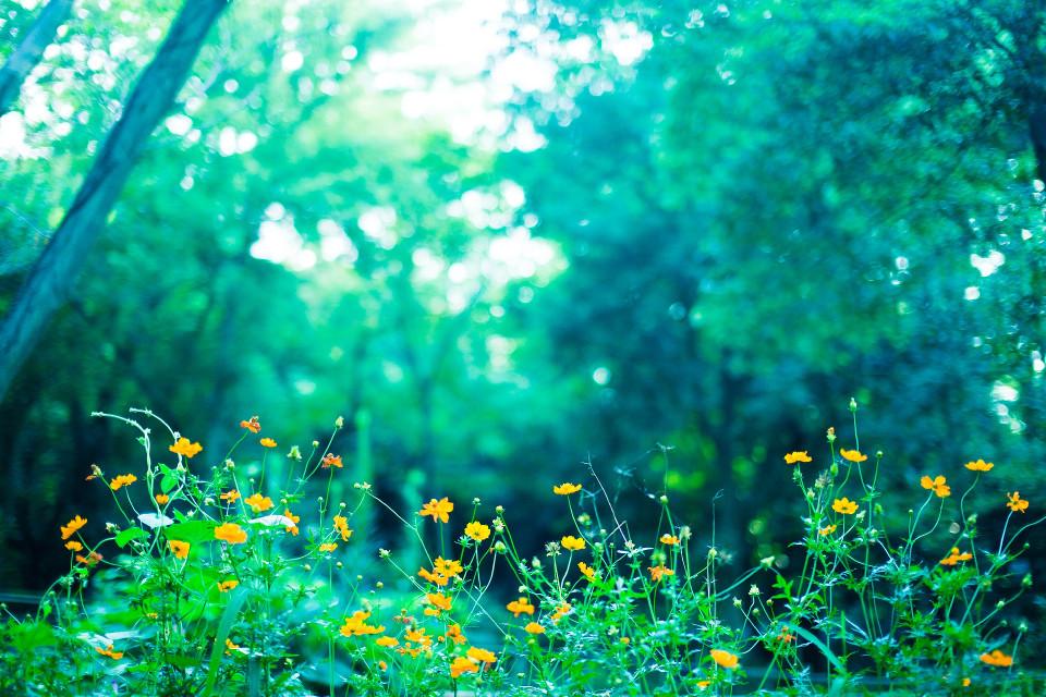 森林と黄色い花