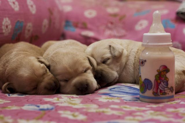 昼寝する子犬