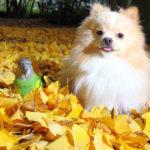 秋・季節の変わり目と体調不良